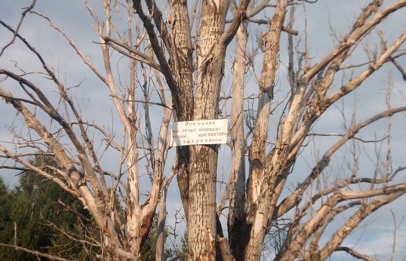 Табличка утверждает, что на прудике проводятся рейды рыбнадзора